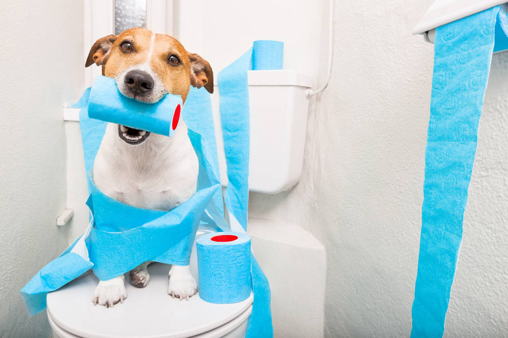 Reduce el consumo de papel higiénico y servilletas de papel